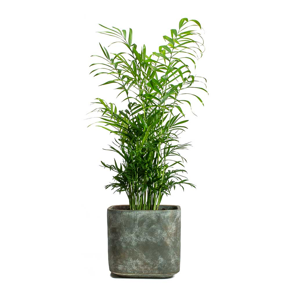 Saray Plant Pot Earth - Large
