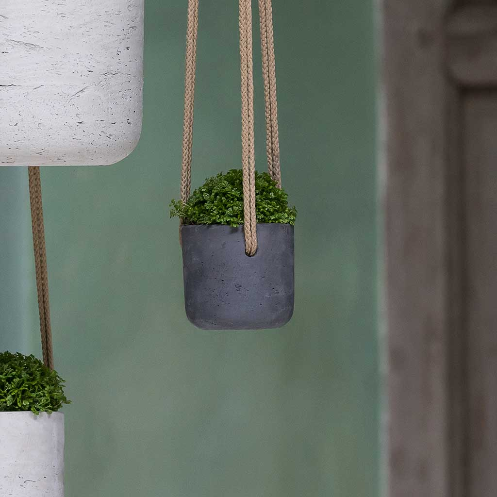 Charlie Hanging Plant Pot - Black Washed - X Small