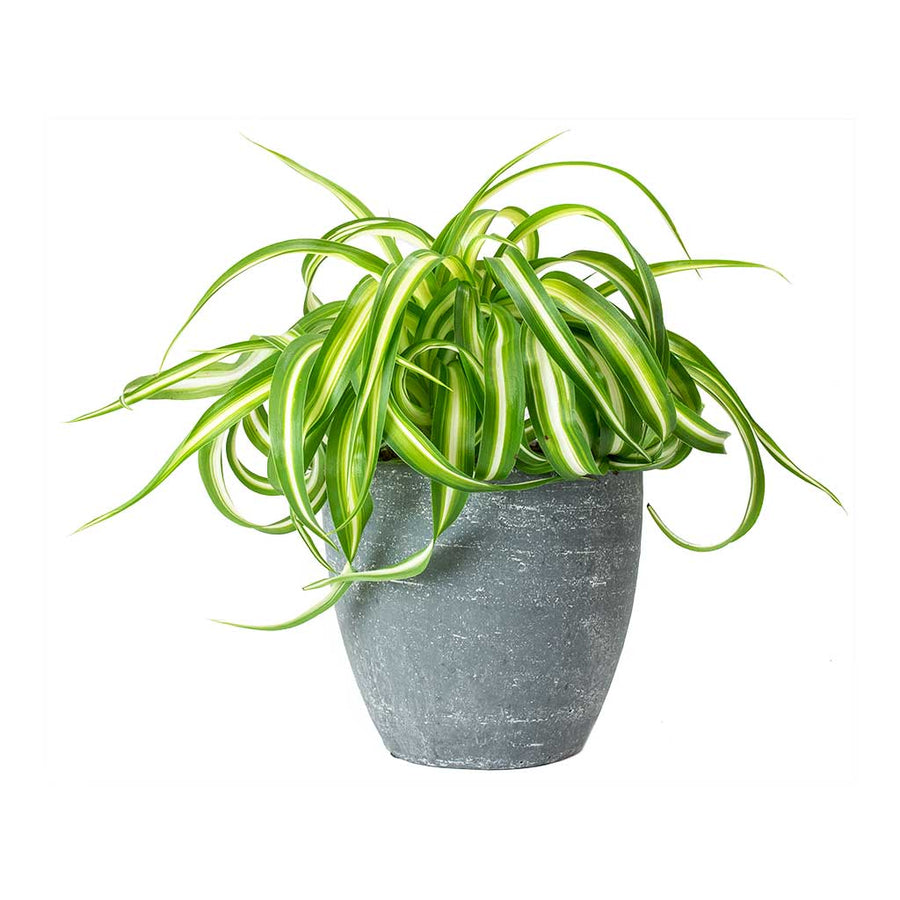 Anne Plant Pot - Blue Stone