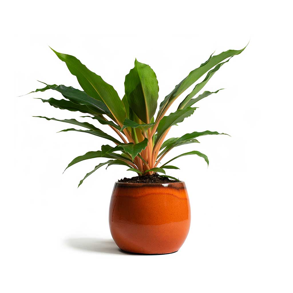 Charlotte Plant Pot - Red Orange - Large