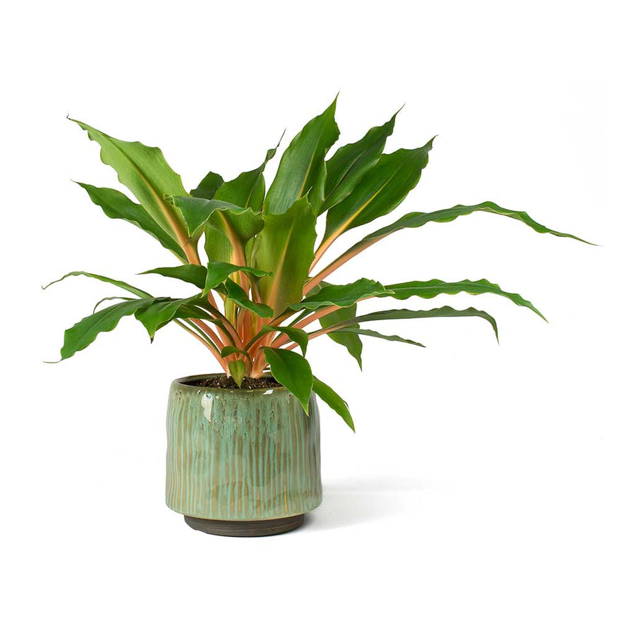 Senne Plant Pot - Ice Green