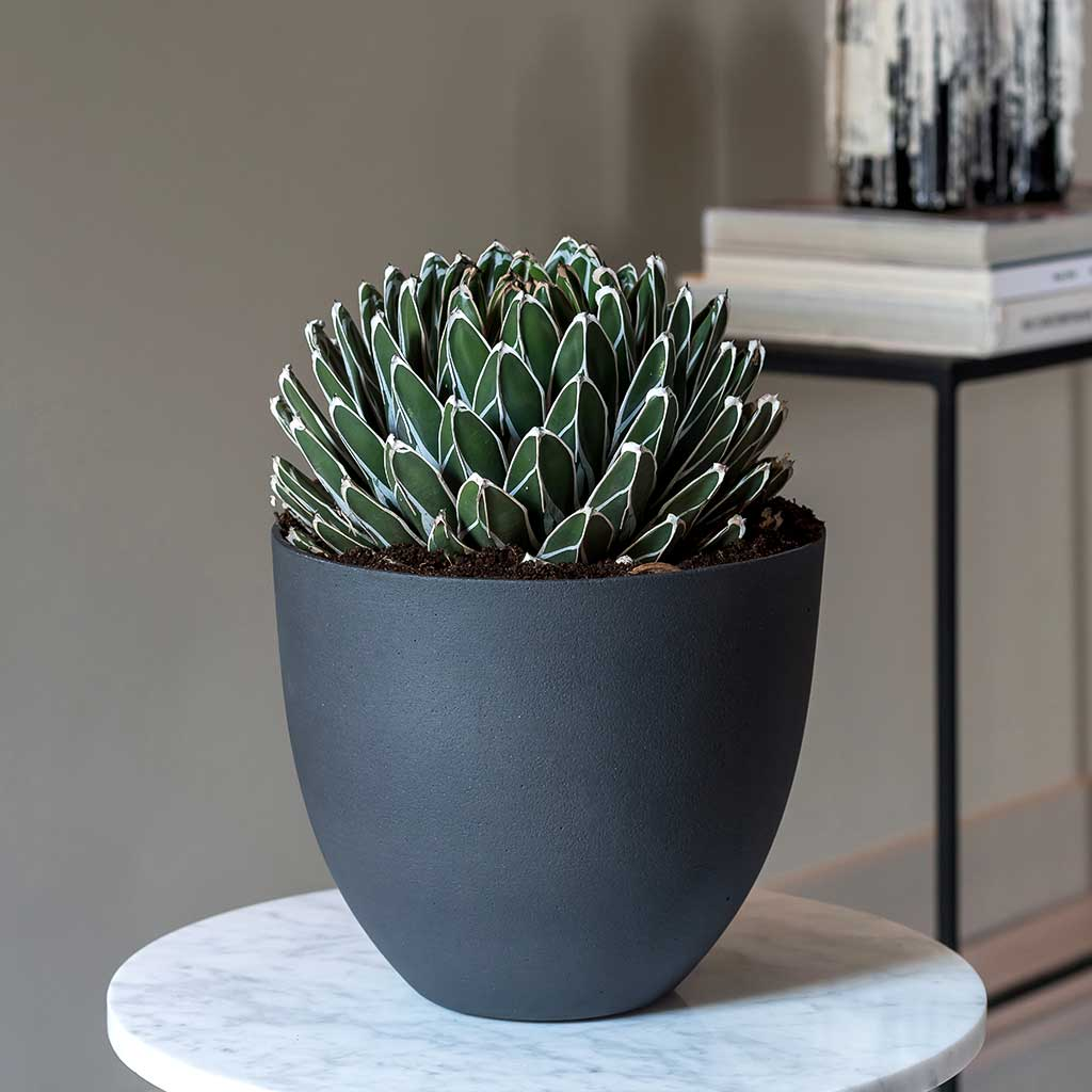 Coral Refined Planter Pine Green