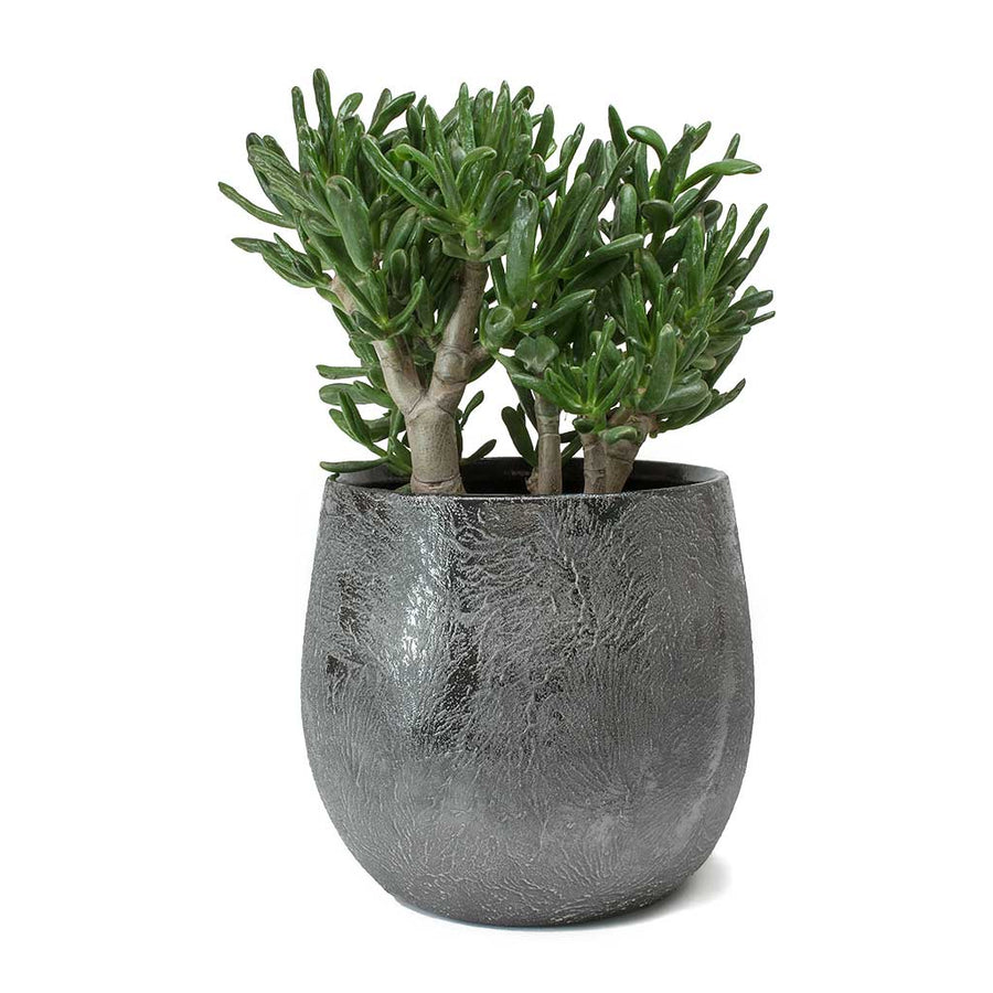 Esra Plant Pot - Lead