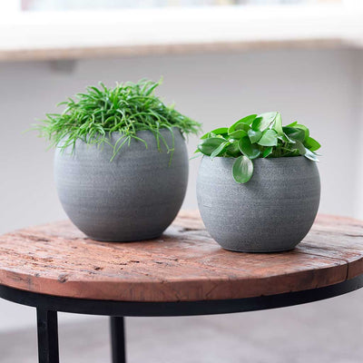 Cresta Plant Pot - Matt Grey - Small Medium Planted