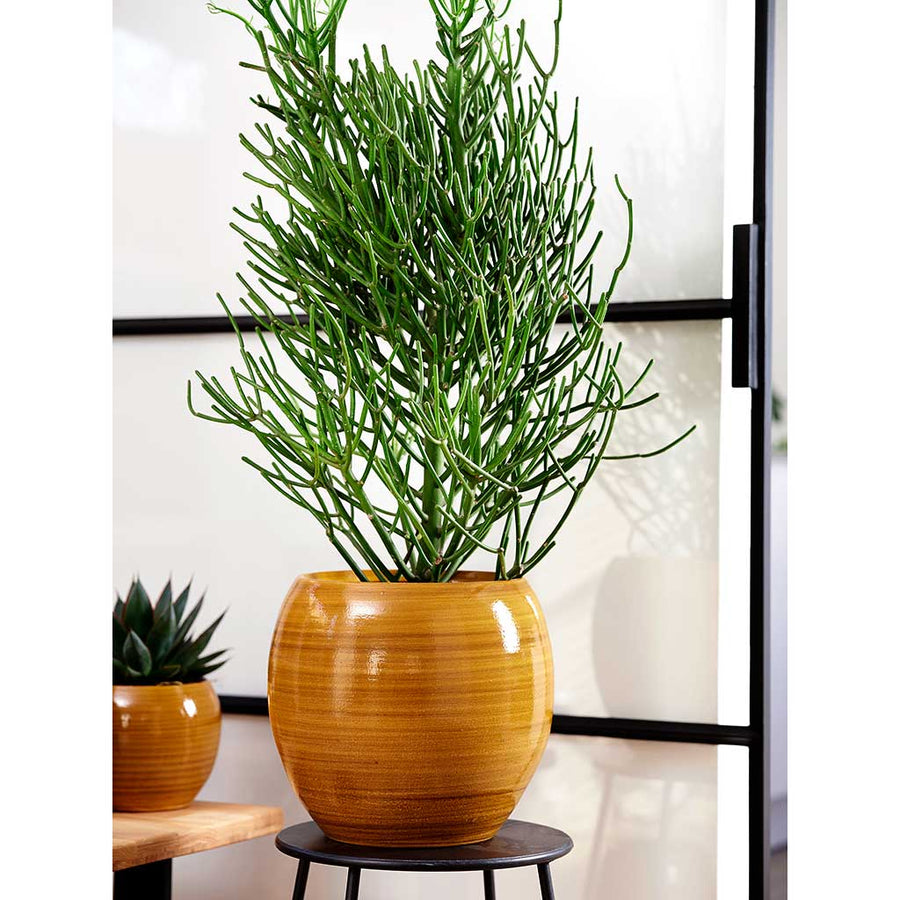 Cresta Plant Pot - Ochre Yellow - Small