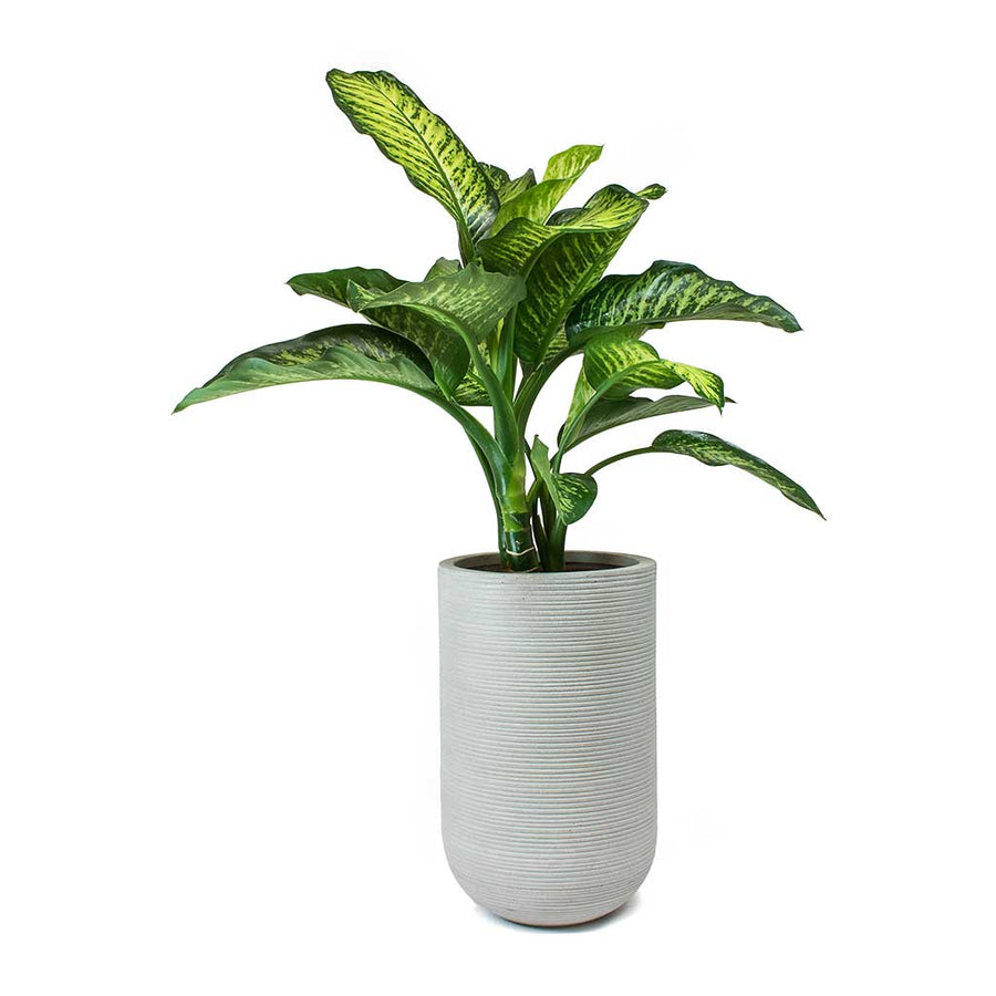 Cody Plant Vase - Ridged Cement