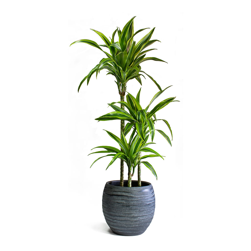 Koen Plant Pot - Anthracite - Large