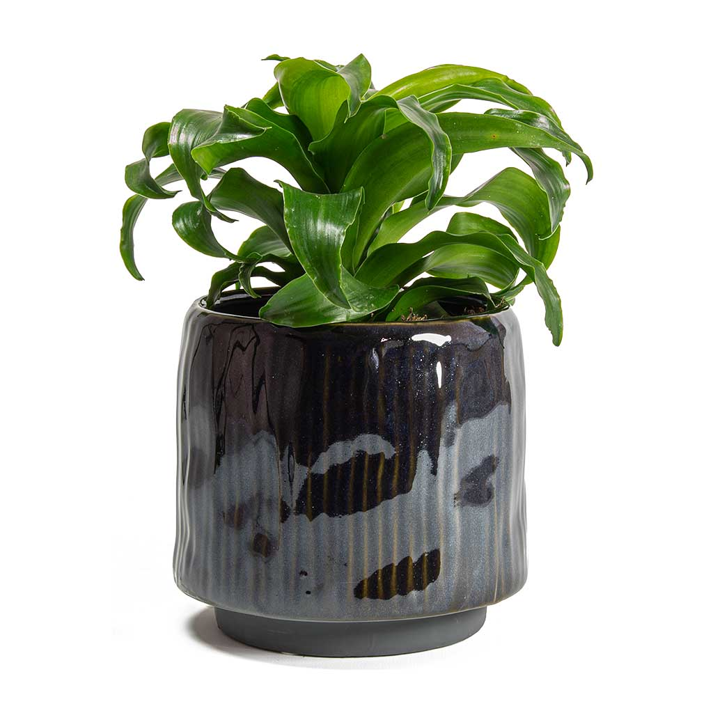 Senne Plant Pot - Blue - Small