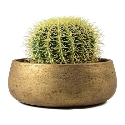 Echinocactus grusonii Golden Barrel Cactus & Eileen Plant Bowl Metallic Copper