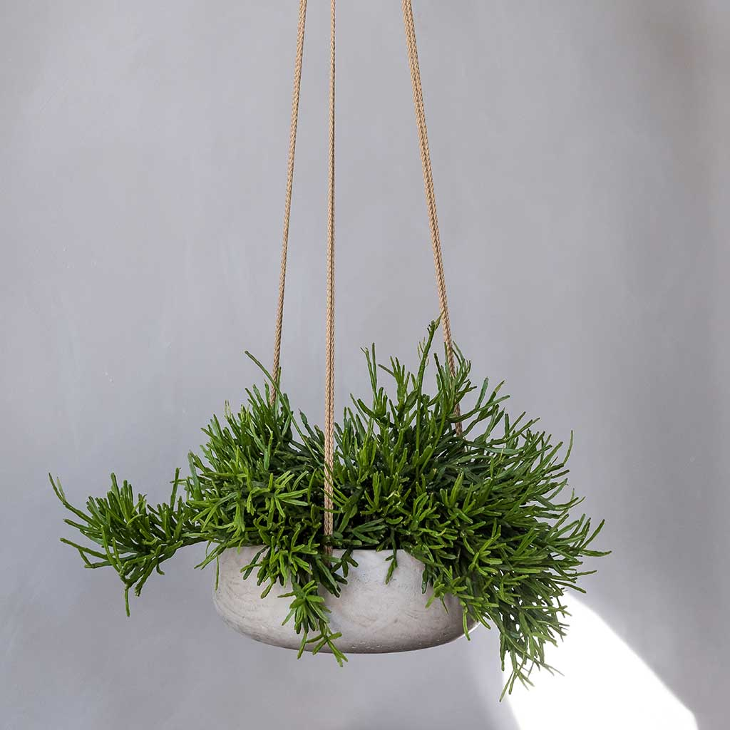Eileen Hanging Plant Bowl - Grey Washed