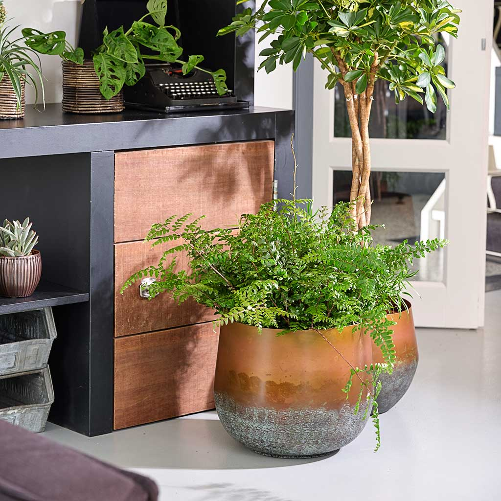 Elisa Metal Plant Pots - Set of 3 - Mystic Bronze