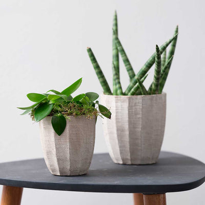 Ellis Plant Pot - Sand with succulents