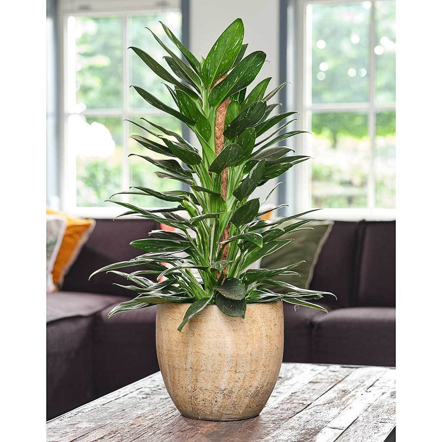Emmy Plant Pot - Camel - Small Medium