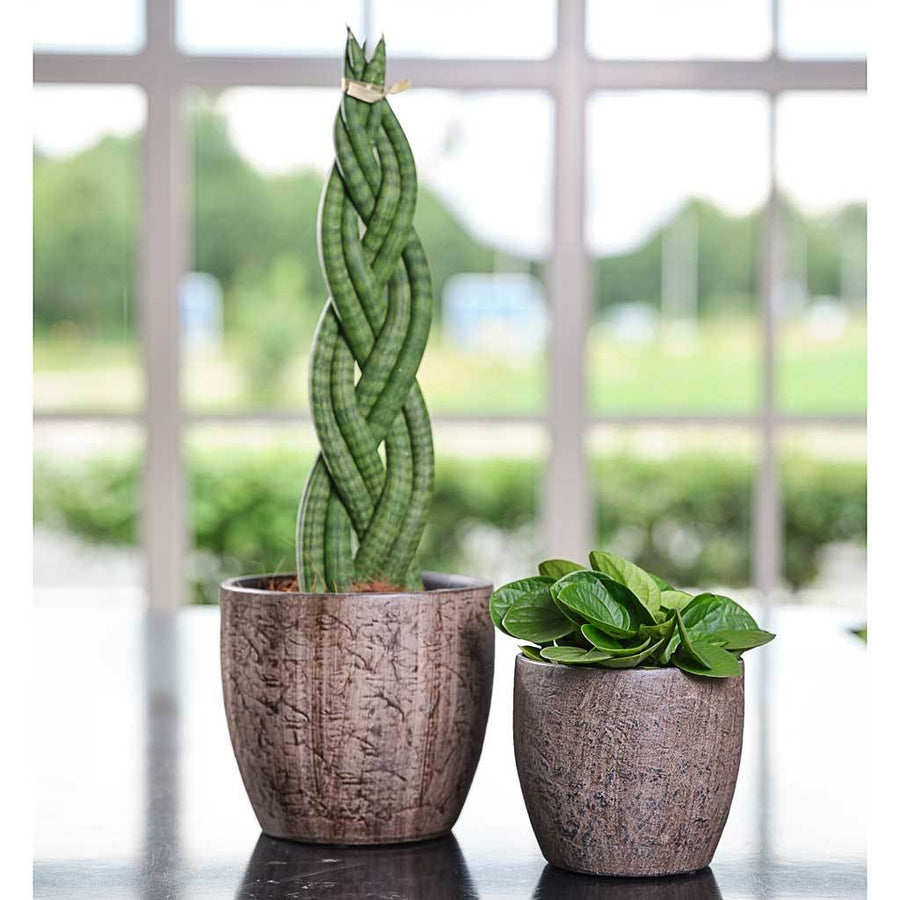 Emmy Plant Pot - Brown - Small Medium