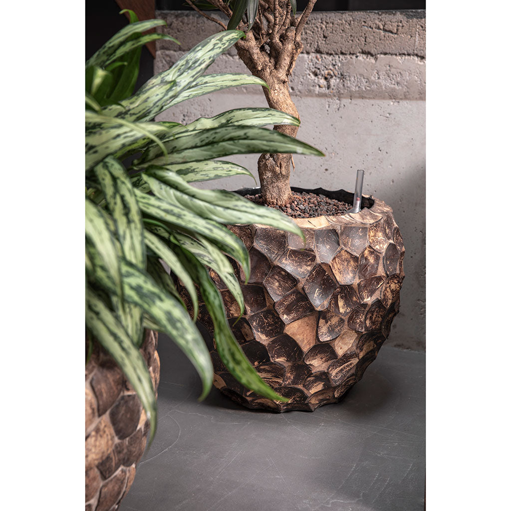 Facets Couple Planter Into Coco
