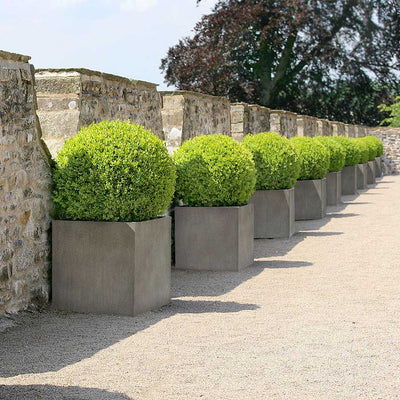Grigio Cube Planter - Natural Concrete Planted