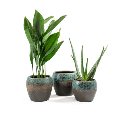 House Plants & Liza Plant Pots Blue Black