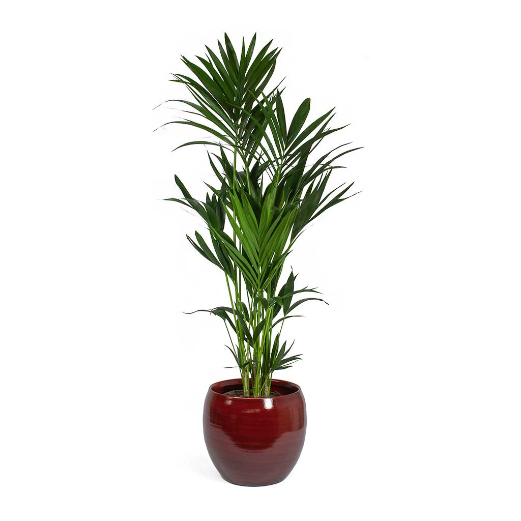 Cresta Plant Pot Deep Red