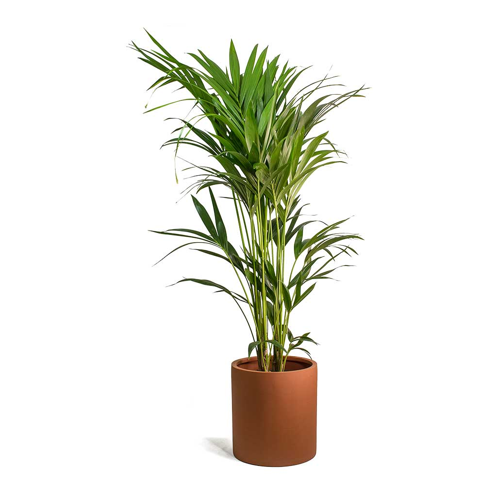 Max Refined Planter Canyon Orange - Medium