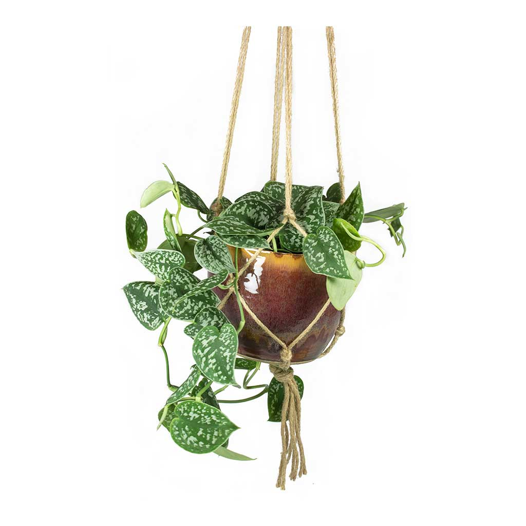 Plant Pot Hanging Rope with Indoor Plant Pot & Houseplant