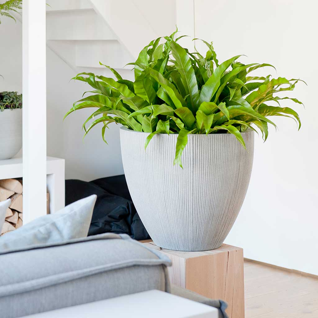 Jesslyn Plant Pot - Ridged Cement