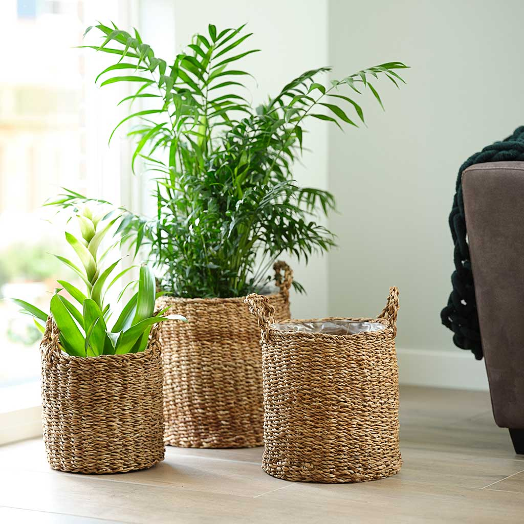 Joris Plant Baskets - Set of 5 - Natural