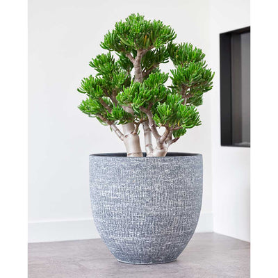 Karlijn Plant Pot - Anthracite - Crassula