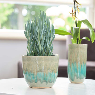 Lara Plant Pot - Light Blue - Planted