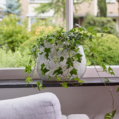 Lieke Oval Planter With Trailing Houseplant - Pearl White