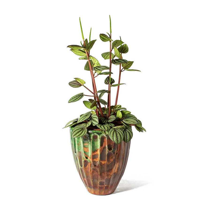 Livin' Beauty Flowerpot - Copper Carved Vertical