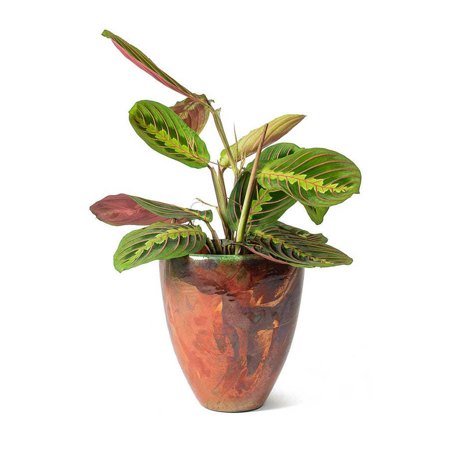Livin' Beauty Flowerpot - Copper Smooth