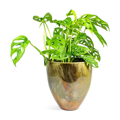 Livin Beauty Flowerpot Silver Smooth & Monstera adansonii Philodendron - Monkey Mask