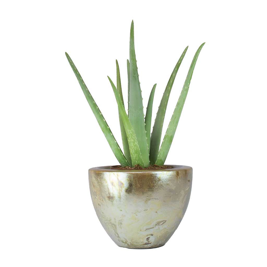 Livin' Beauty Plant Vase - Pearl