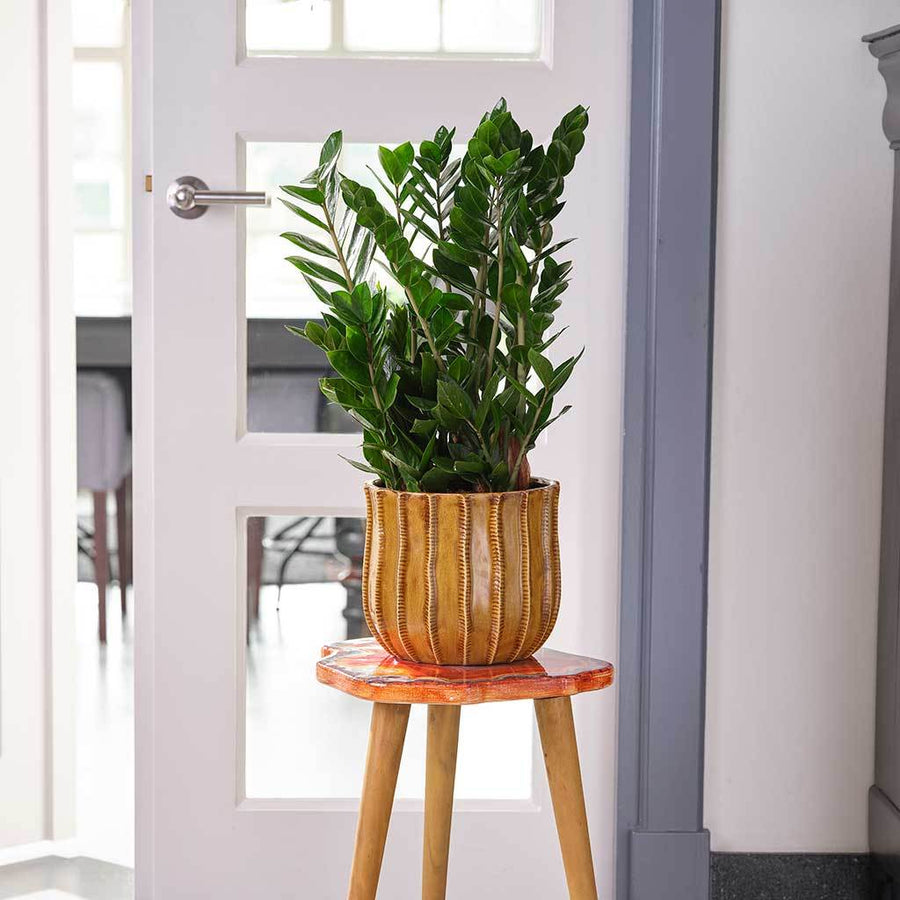 Manon Plant Pot - Ochre - Small