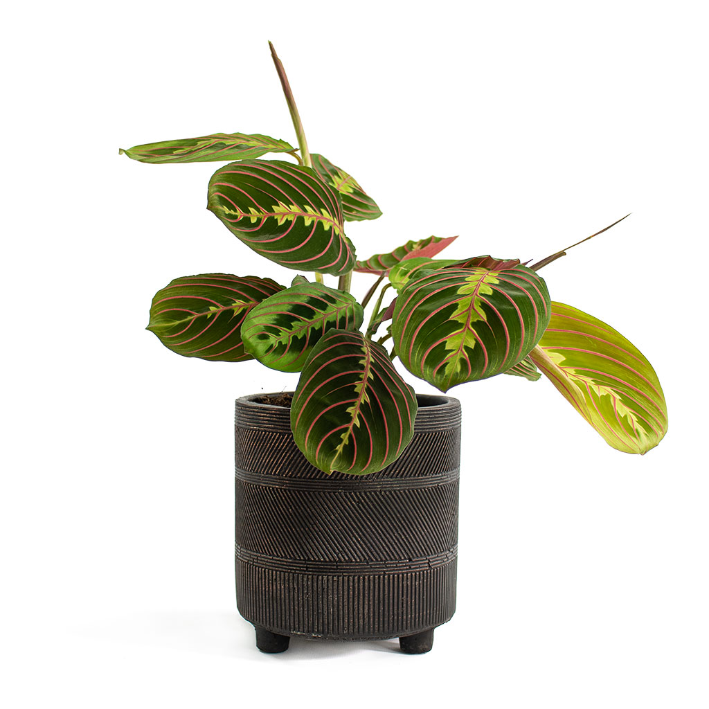 Nola Plant Pot Shiny Brown Large