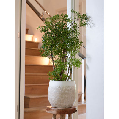 Merin Plant Pot - Sand - Planted