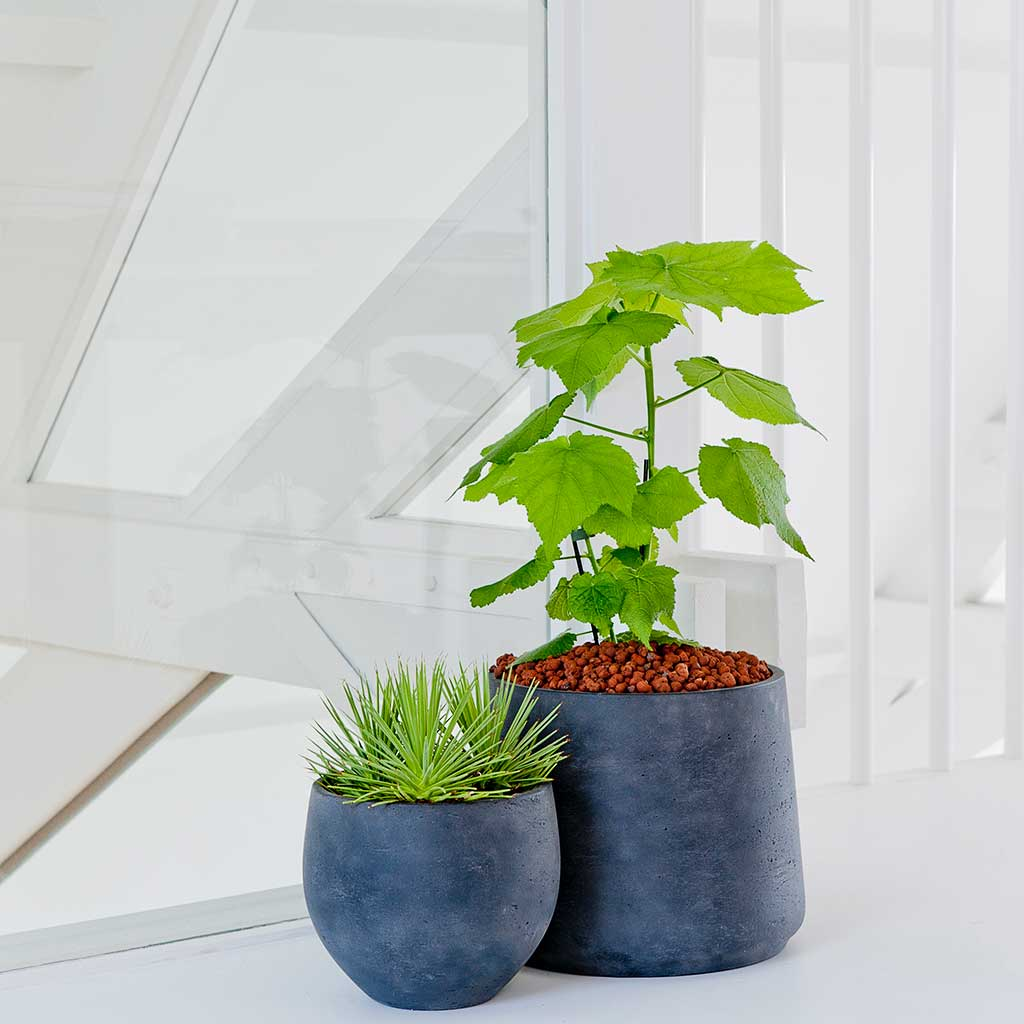 Mini Orb Kevan Plant Pot - Black Washed - Medium