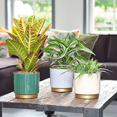 Minou Plant Pots Champagne, Green, Light Blue with Houseplants
