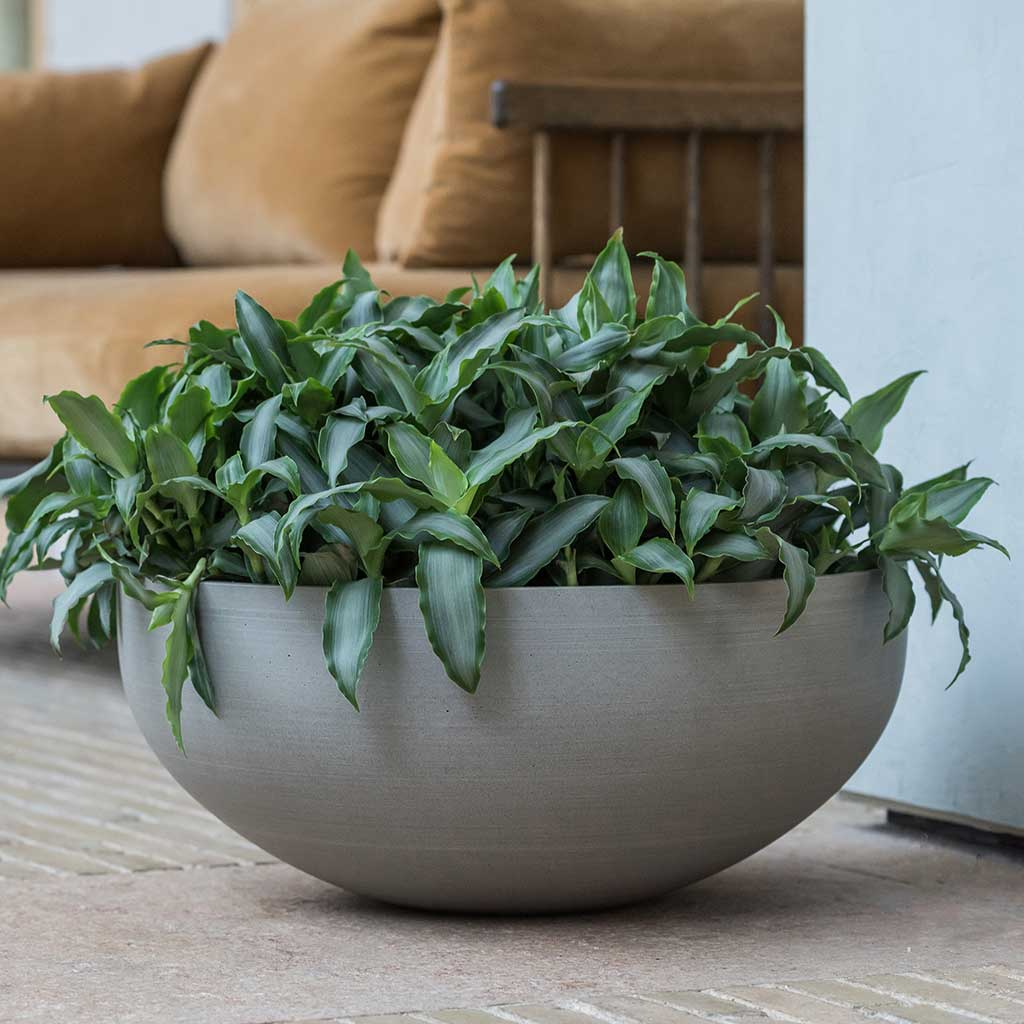 Morgana Plant Bowl - Clouded Grey