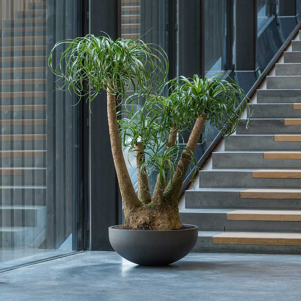 Morgana Plant Bowl - Pine Green