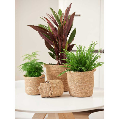 Nelis Plant Baskets - Natural & Houseplants