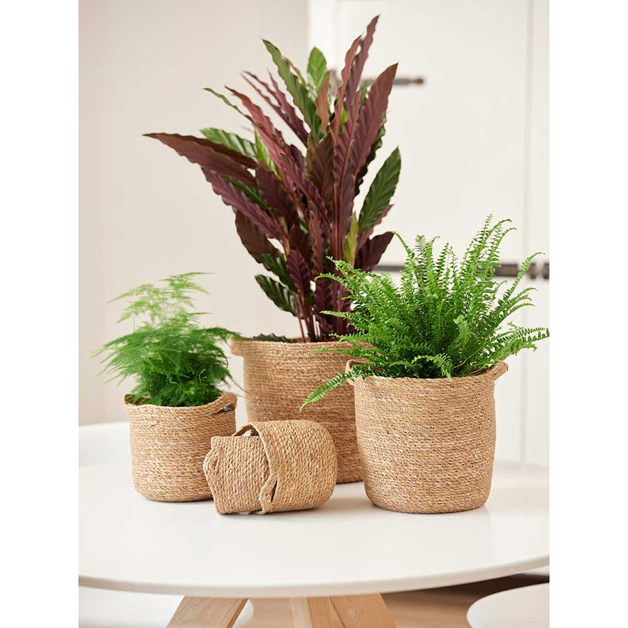 Nelis Plant Basket - Natural