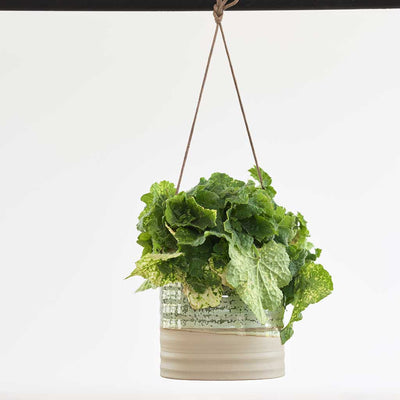 Nik Hanging Indoor Plant Pot - Ice Green