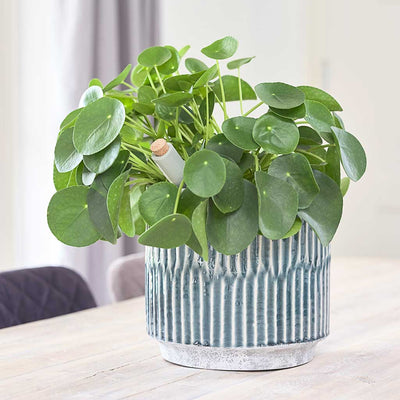Onno Plant Pot - Blue Planted