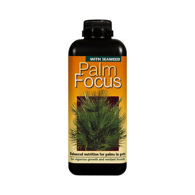 Palm Focus - Plant Nutrition Indoor Palm Trees - 1 Litre