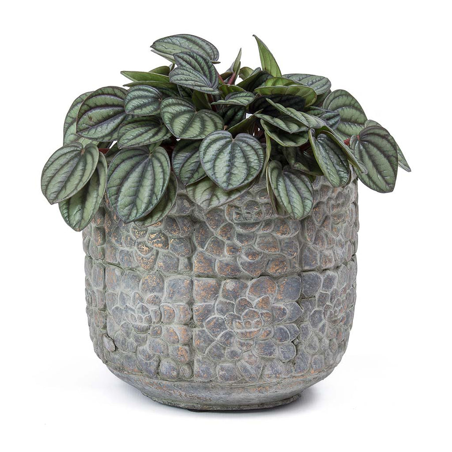 Bloom Plant Pot - Earth Cement