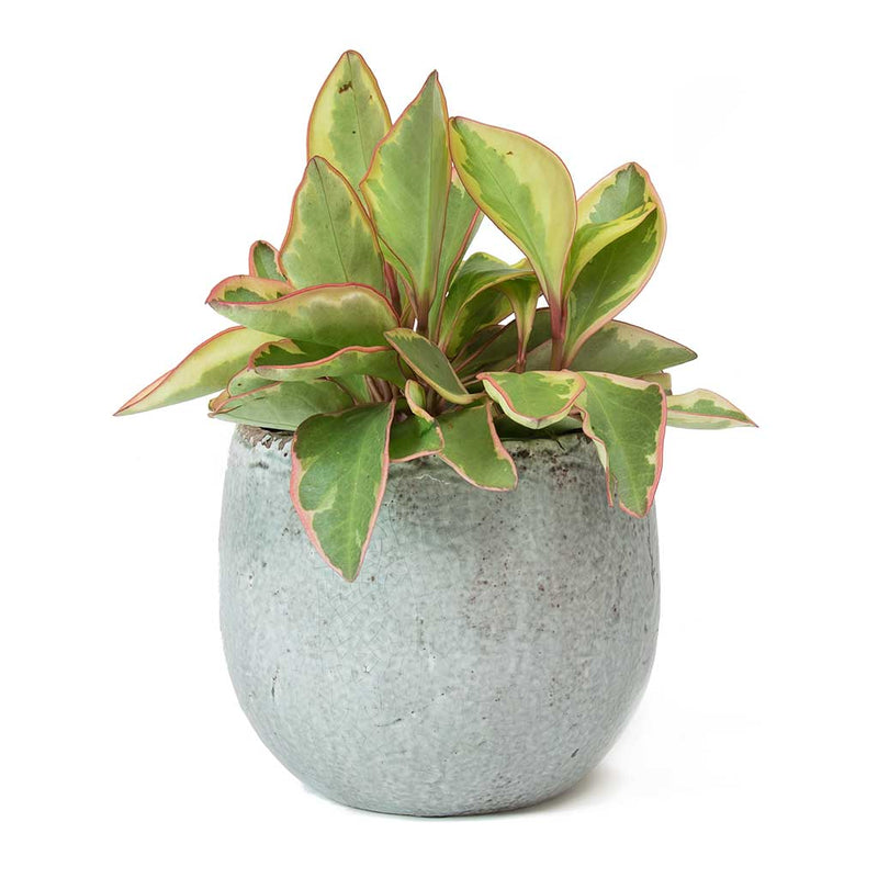 Kirsty Plant Pot Ice Blue Quality Indoor Plant Pots