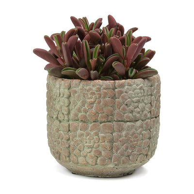 Bloom Plant Pot - Terra Red Cement & Peperomia graveolens