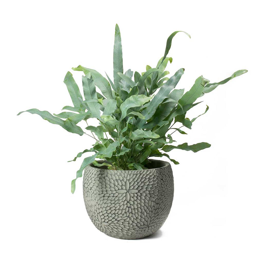 Mick Plant Pot - Mint - Medium - Large