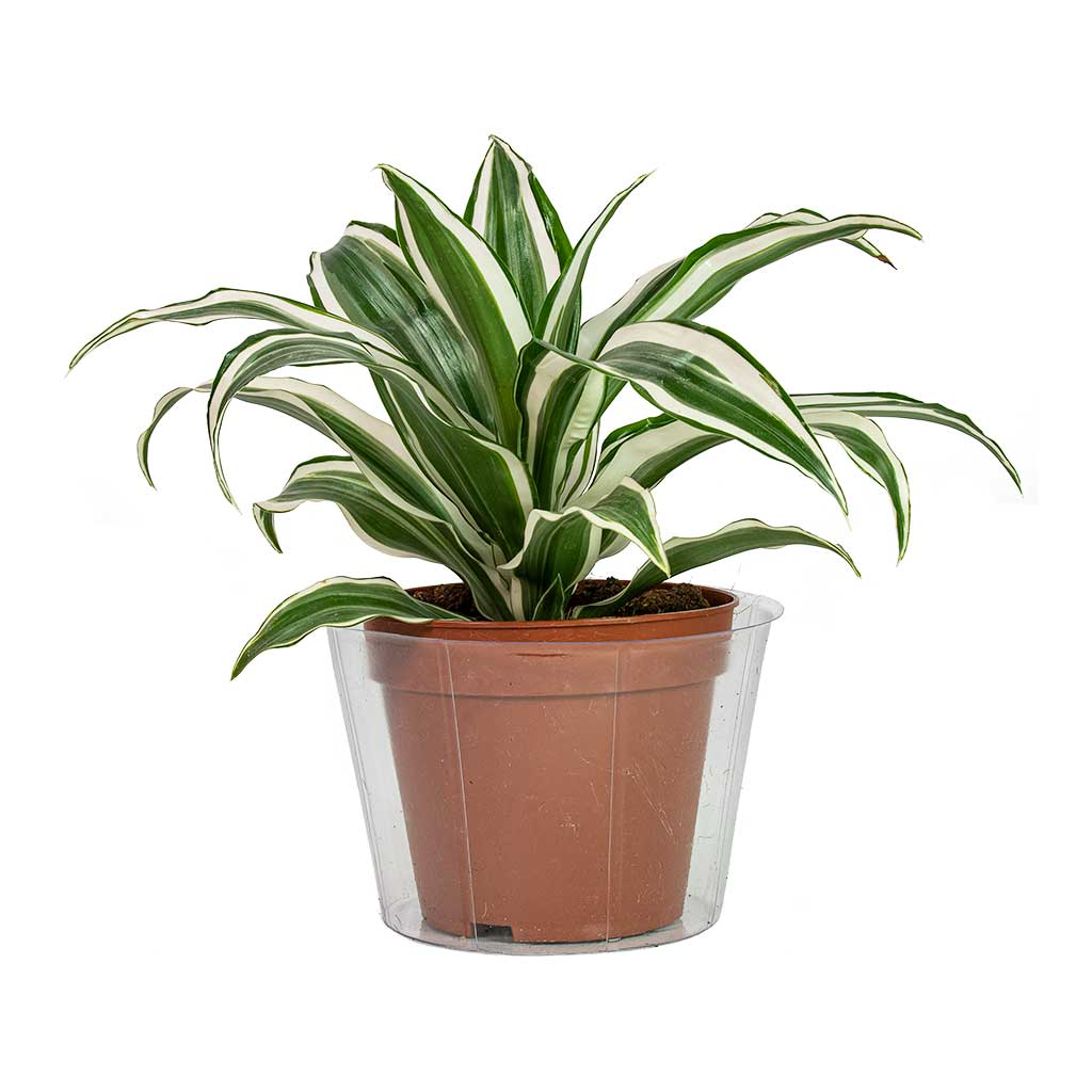 Plant Pot Inlay Liner - Clear - 40 x 26cm